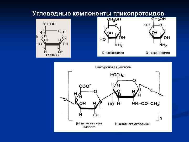 Углеводные компоненты гликопротеидов