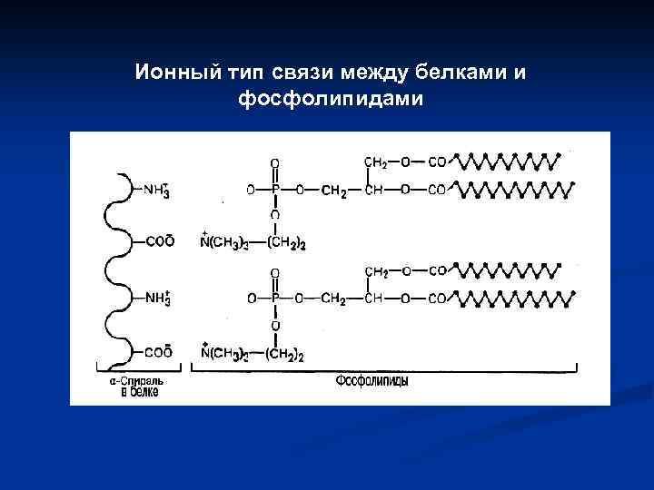 Ионный тип связи между белками и фосфолипидами