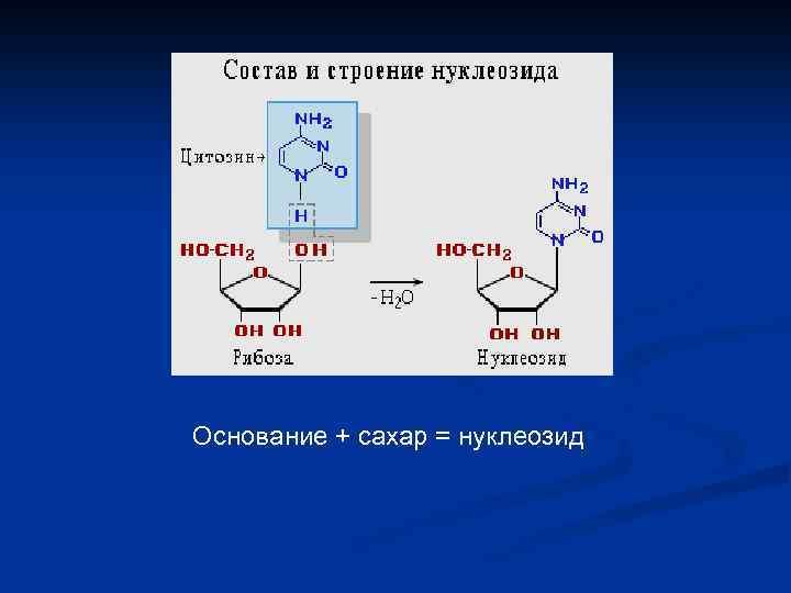 Основание + сахар = нуклеозид