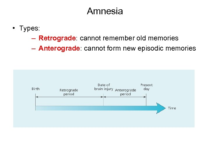 Amnesia • Types: – Retrograde: cannot remember old memories – Anterograde: cannot form new