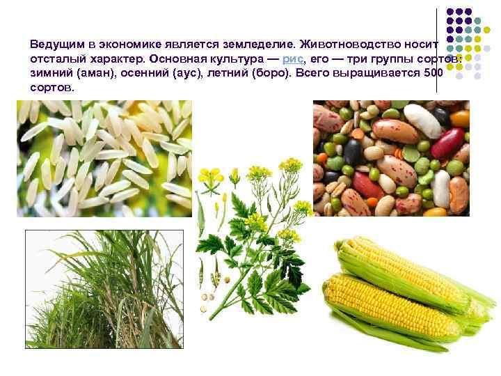Ведущим в экономике является земледелие. Животноводство носит отсталый характер. Основная культура — рис, его