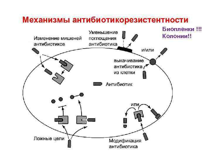 Механизмы антибиотикорезистентности Биопленки !!! Колонии!!