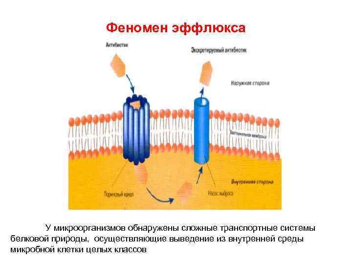 Феномен эффлюкса У микроорганизмов обнаружены сложные транспортные системы белковой природы, осуществляющие выведение из внутренней