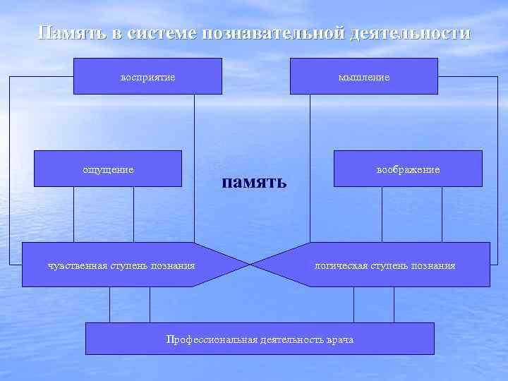 Память в системе познавательной деятельности восприятие ощущение мышление воображение память чувственная ступень познания логическая