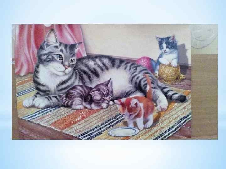 студенческие рассказ по картинке кошка с котятами средняя группа семейные альбомы хранят