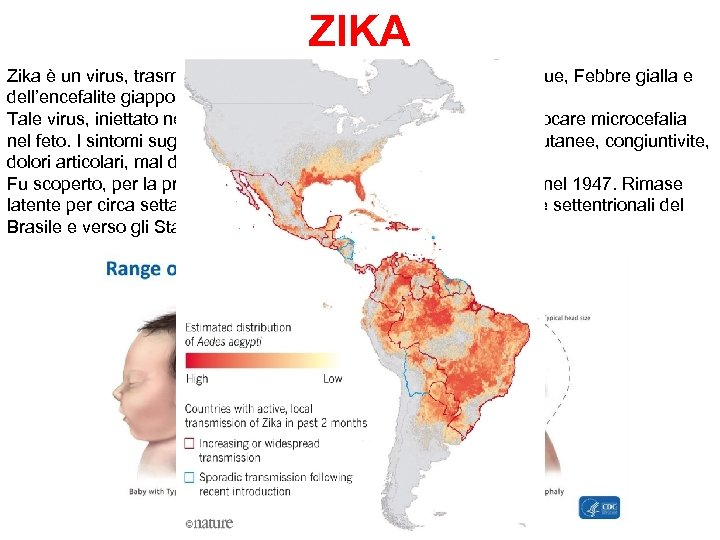 ZIKA Zika è un virus, trasmesso dalle zanzare, simile a quello della Dengue, Febbre
