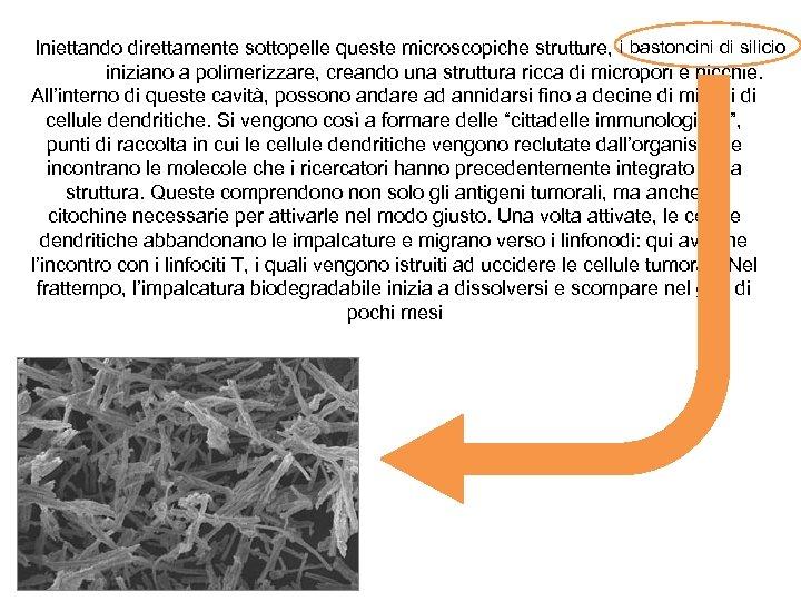 Iniettando direttamente sottopelle queste microscopiche strutture, i bastoncini di silicio iniziano a polimerizzare, creando