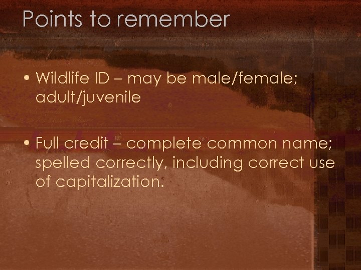 Points to remember • Wildlife ID – may be male/female; adult/juvenile • Full credit