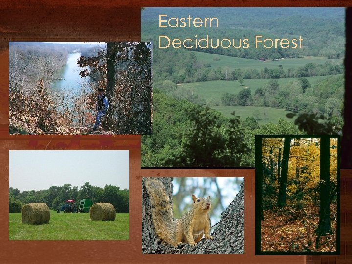 Eastern Deciduous Forest