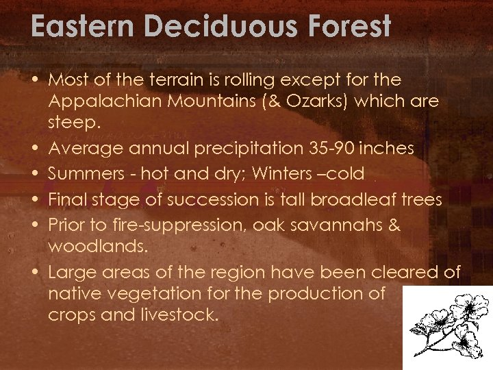 Eastern Deciduous Forest • Most of the terrain is rolling except for the Appalachian