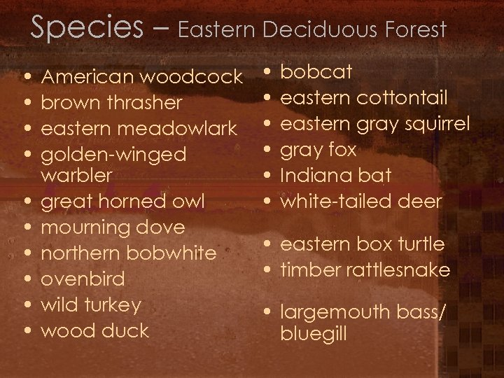Species – Eastern Deciduous Forest • • • American woodcock brown thrasher eastern meadowlark