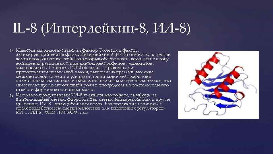 IL-8 (Интерлейкин-8, ИЛ-8) Известен как хемотаксический фактор Т-клеток и фактор, активирующий нейтрофилы. Интерлейкин-8 (ИЛ-8)