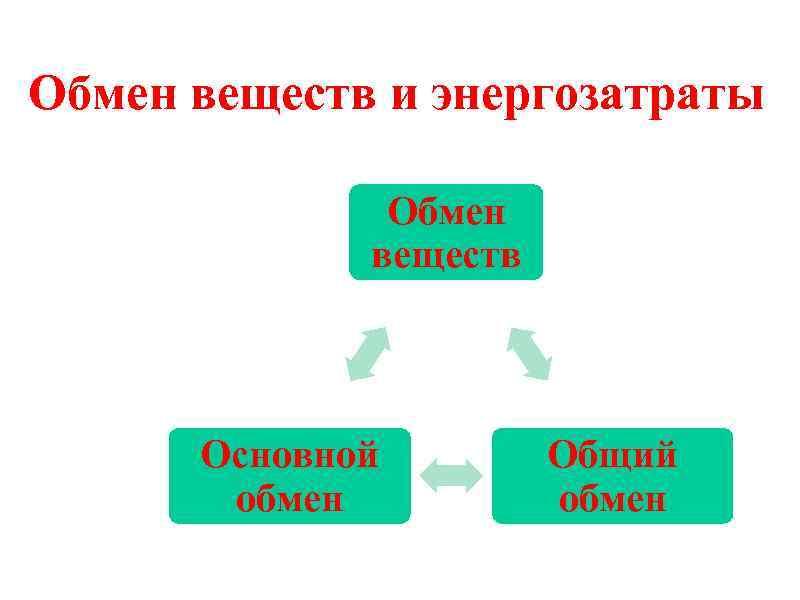 Обмен веществ и энергозатраты Обмен веществ Основной обмен Общий обмен