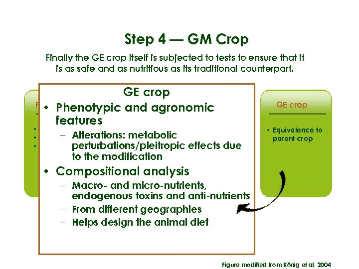 Step 4 — GM Crop Finally the GE crop itself is subjected to tests