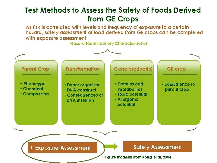 Test Methods to Assess the Safety of Foods Derived from GE Crops As risk