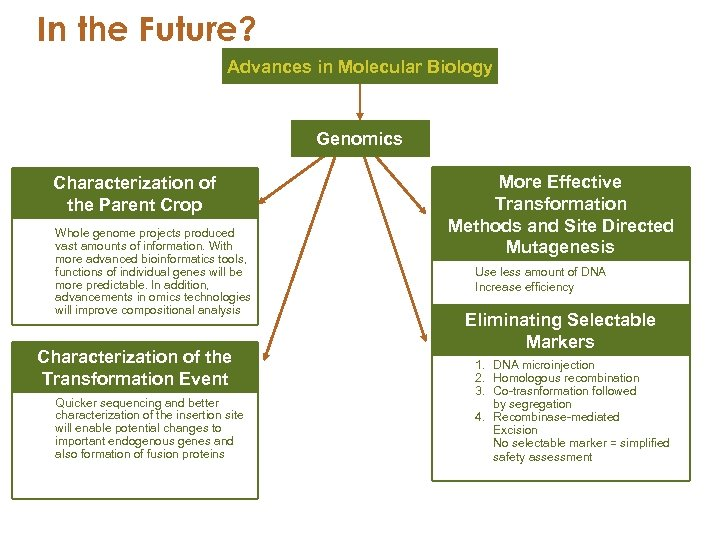 In the Future? Advances in Molecular Biology Genomics Characterization of the Parent Crop Whole