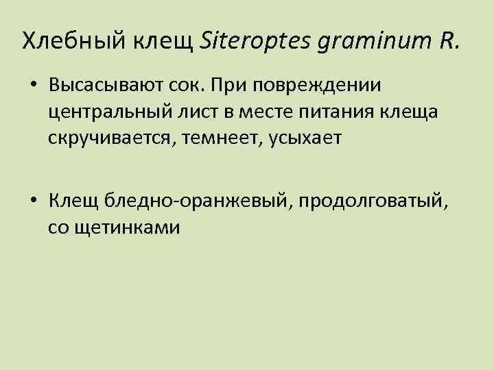 Хлебный клещ Siteroptes graminum R. • Высасывают сок. При повреждении центральный лист в месте