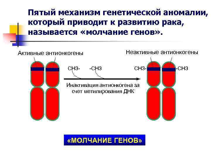 Пятый механизм генетической аномалии, который приводит к развитию рака, называется «молчание генов» . Неактивные