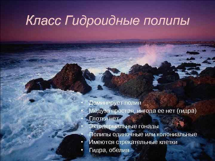 Класс Гидроидные полипы • • Доминирует полип Медуза простая, ингода ее нет (гидра) Глотки