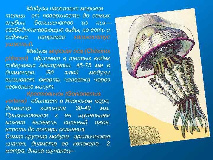 Медузы населяют морские толщи от поверхности до самых глубин, большинство из них— свободноплавающие виды,