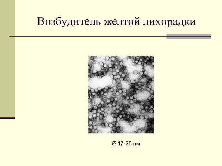 Возбудитель желтой лихорадки Ǿ 17 -25 нм
