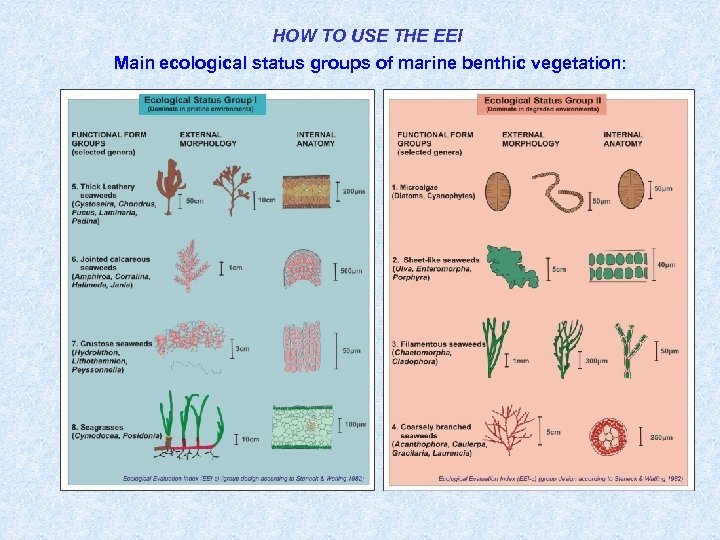 HOW TO USE THE EEI Main ecological status groups of marine benthic vegetation: