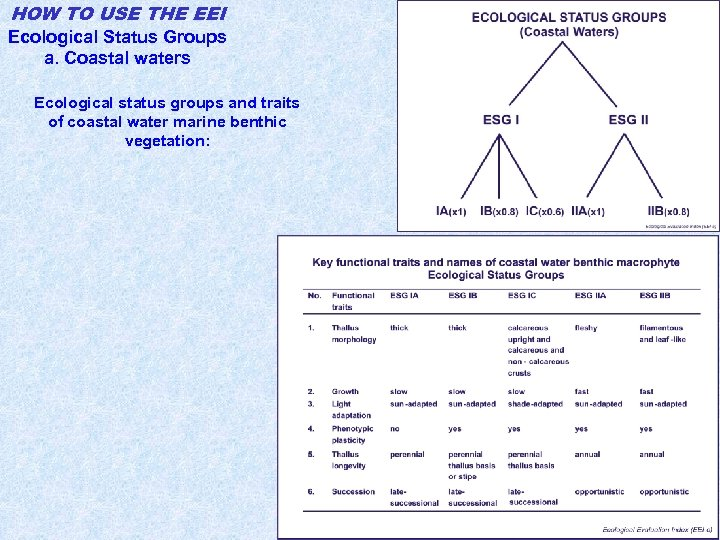 HOW TO USE THE EEI Ecological Status Groups a. Coastal waters Ecological status groups