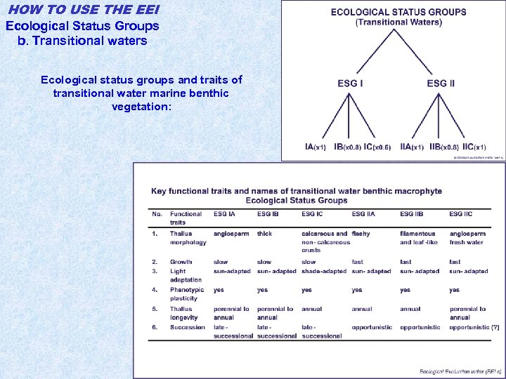 HOW TO USE THE EEI Ecological Status Groups b. Transitional waters Ecological status groups