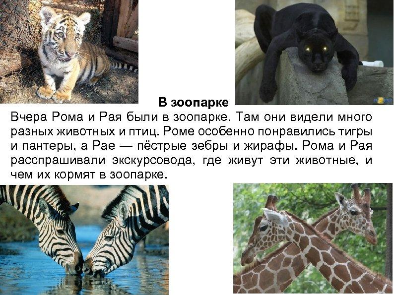 В зоопарке Вчера Рома и Рая были в зоопарке. Там они видели много разных