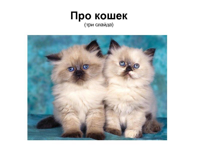 Про кошек (три слайда)