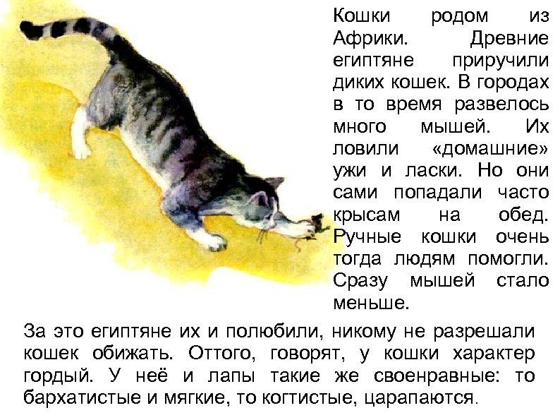 Кошки родом из Африки. Древние египтяне приручили диких кошек. В городах в то время
