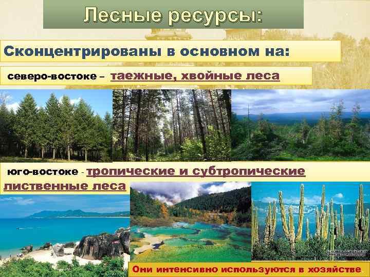 Лесные ресурсы: Сконцентрированы в основном на: северо-востоке – таежные, хвойные леса юго-востоке - тропические