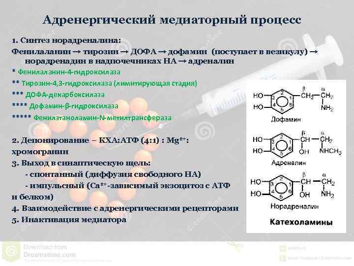 Адренергический медиаторный процесс 1. Синтез норадреналина: Фенилаланин → тирозин → ДОФА → дофамин (поступает
