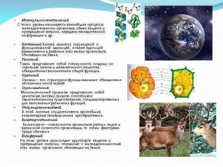 Молекулярно-генетический С этого уровня начинаются важнейшие процессы жизнедеятельности организма: обмен веществ и превращение энергии,