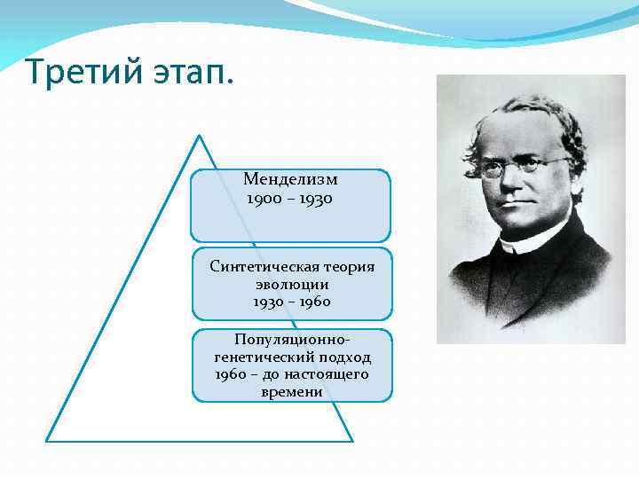 Третий этап. Менделизм 1900 – 1930 Синтетическая теория эволюции 1930 – 1960 Популяционногенетический подход
