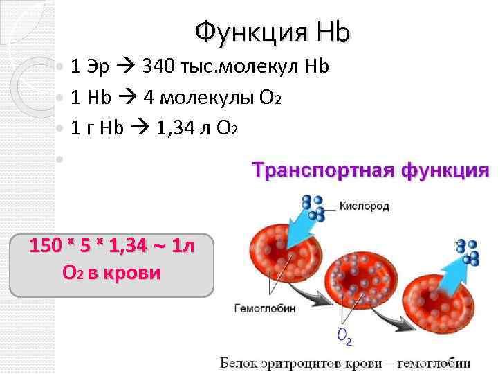 Функция Hb 1 Эр 340 тыс. молекул Hb 1 Hb 4 молекулы О 2