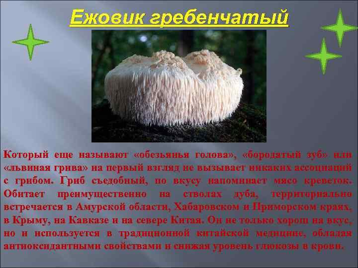 Ежовик гребенчатый Который еще называют «обезьянья голова» , «бородатый зуб» или «львиная грива» на