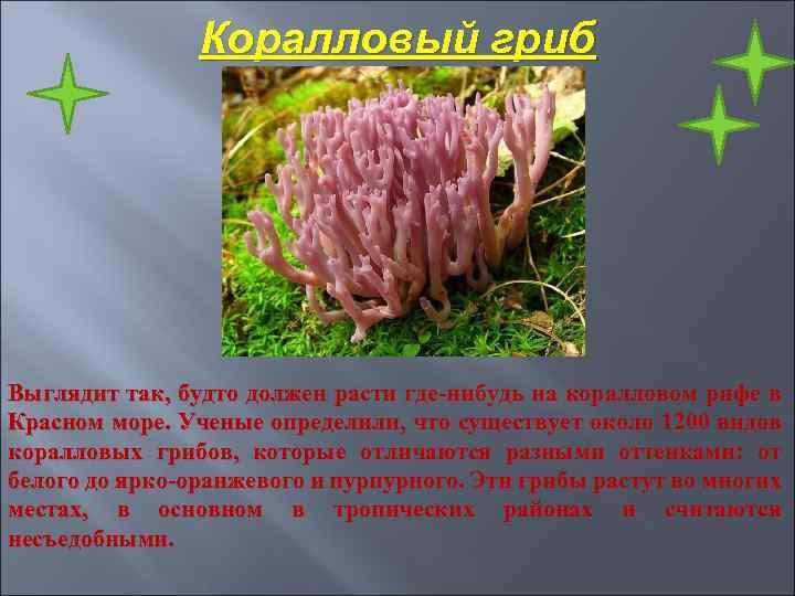 Коралловый гриб Выглядит так, будто должен расти где-нибудь на коралловом рифе в Красном море.