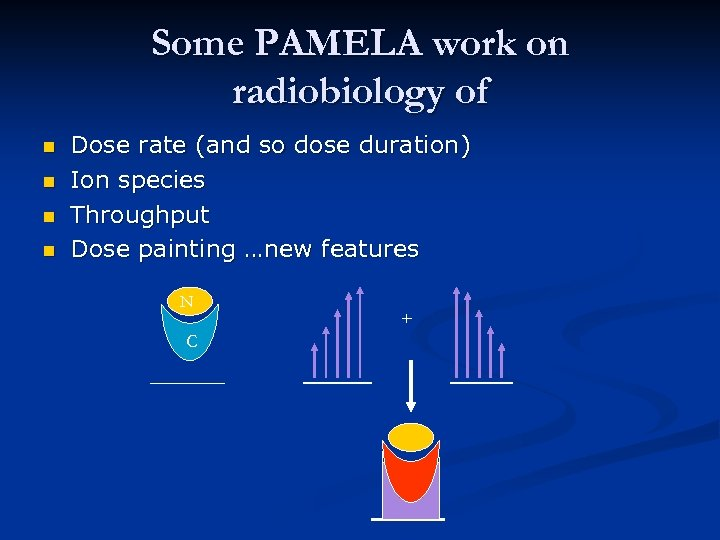 Some PAMELA work on radiobiology of n n Dose rate (and so dose duration)