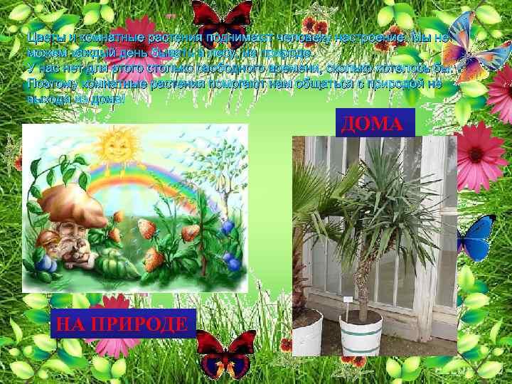 Цветы и комнатные растения поднимают человеку настроение. Мы не можем каждый день бывать в