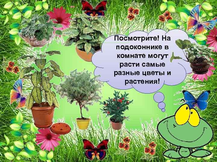 Посмотрите! На подоконнике в комнате могут расти самые разные цветы и растения!