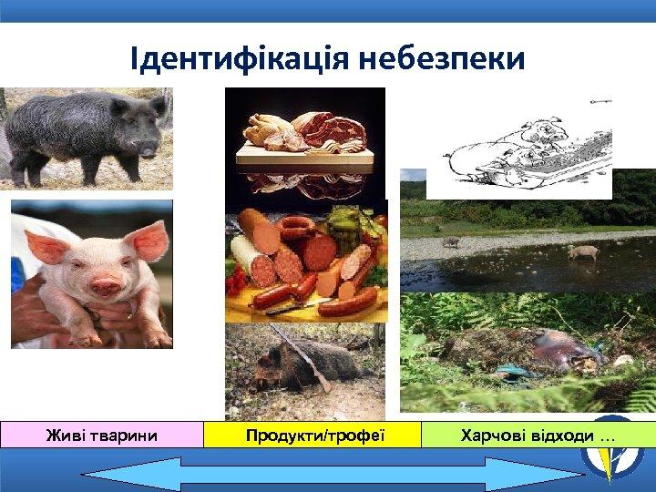 Ідентифікація небезпеки Живі тварини Продукти/трофеї Харчові відходи …