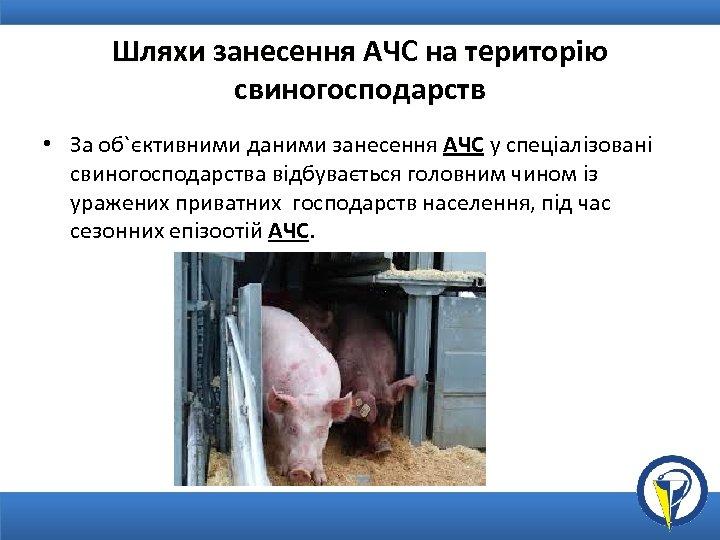 Шляхи занесення АЧС на територію свиногосподарств • За об`єктивними даними занесення АЧС у спеціалізовані