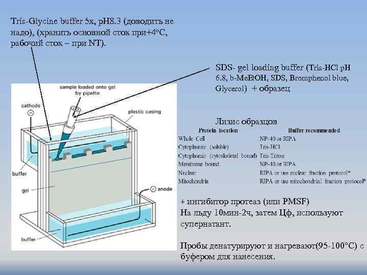 Tris-Glycine buffer 5 x, p. H 8. 3 (доводить не надо), (хранить основной сток