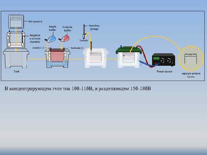 В концентрирующем геле ток 100 -110 В, в разделяющем 150 -180 В