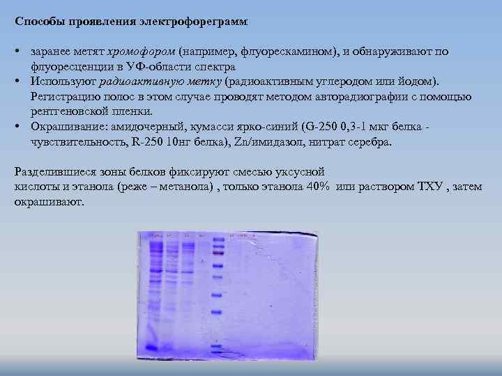 Способы проявления электрофореграмм • заранее метят хромофором (например, флуорескамином), и обнаруживают по флуоресценции в