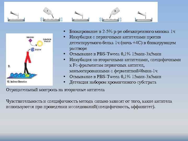 • Блокирование в 2 -5% р-ре обезжиренного молока 1 ч • Инкубация с