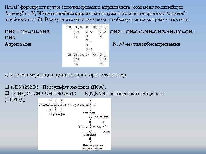 """ПААГ формируют путем сополимеризации акриламида (создающего линейную """"основу"""") и N, N′-метиленбисакриламида (служащего для поперечных"""