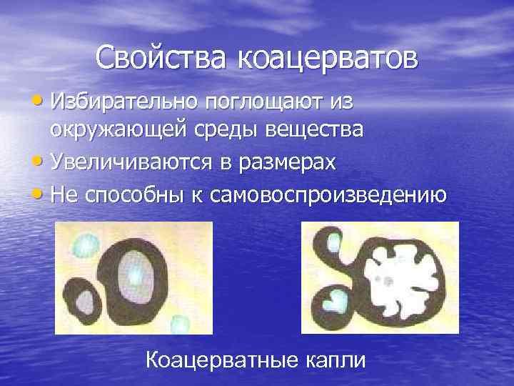 Свойства коацерватов • Избирательно поглощают из окружающей среды вещества • Увеличиваются в размерах •