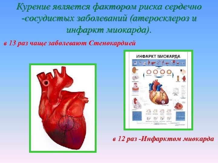Курение является фактором риска сердечно -сосудистых заболеваний (атеросклероз и инфаркт миокарда). в 13 раз